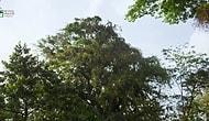 Derin Ormanlarda Işık Savaşına Tutuşan Bitkiler