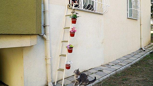 Şebnem İlhan (diğer adıyla mükemmel insan) merdiveni kedilerin rahatça evine girip çıkabilmesi için hazırlamış.