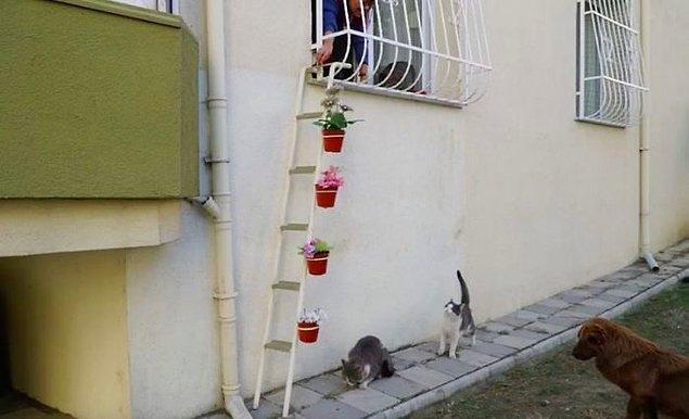 Zaten tepkiler de gayet olumlu oldu, özellikle sıcacık bir yuvayı kendilerine otel yapan kedicikler. ❤