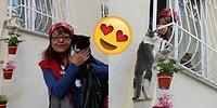 Hava Soğuduğunda Evine Rahatça Girebilsinler Diye Sokak Kedilerine Merdiven Yapan Kadın