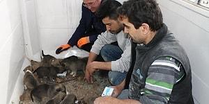Sıcak Bir Yuvaya Kavuştular: Annesiz Kalan Yavru Köpeklere İşçiler Sahip Çıktı