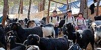 Her Gün Ormanda 10 Kilometre Yürüyorlar: Konargöçer Yörük Çocuklarının Eğitim İçin Zorlu Yolu