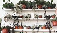 Yeşilin 50 Tonu! Bitki Aşıklarının Gözlerini Kamaştıracak 17 Yemyeşil Instagram Hesabı