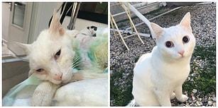 Kedi Muro İçin Adalet Bekleniyor: Kürekle İşkenceye 'Kovuşturmaya Yer Yok' Kararı