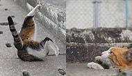 Buldukları Tahliye Borusunu Oyun Alanına Dönüştüren Minnoş Sokak Kedilerinden 17 Fotoğraf