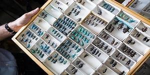 60 Yılda 10 Milyon Değerli Böcek Koleksiyonu Oluşturan Çift