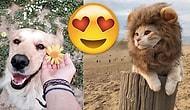 Bu Kadar da Tatlı Olunmaz ki! Minnoşlukta Doktora Yapmış Sevmelere Doyamayacağınız 23 Hayvan