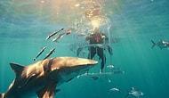 İyice Abartın! Galaxy S8'in Kutu Açılışını Köpek Balıkları İçinde Yaptılar!