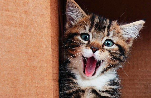 Ancak yapılan yeni bir çalışmaya göre bunların hepsi numara. Çünkü kediler fazlasıyla akıllı.