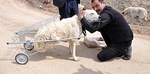 Yürüyemeyen Köpeğe Pazar Arabasından 'Yürüteç' Yapmıştı: Hayvanseverler Mehmet Köksal'ı Yalnız Bırakmadı