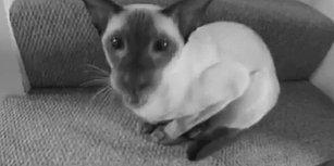 Kedi Miyavlamasını Dijital Ortamda Müziğe Çeviren Yetenekli Adam