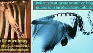 Doğanın Olasılıklar Deryasında Şaşırılacak Şeylerin Tükenmeyeceğinin Kanıtı 21 Görüntü