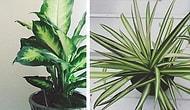 Evinizin Havasını Temizlemekle Kalmayıp Tropik Bir Ada Havası Yaratan 15 İç Mekan Bitkisi