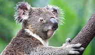 Hadi Bakalım Göster Bilgini! Hayvanlar Alemini Ne Kadar Tanıyorsun?