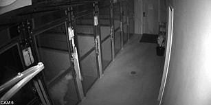Hastaneden Ustalıkla Kaçan Köpeğin Helal Olsun Dedirten Görüntüsü