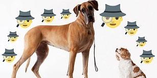 """Köpeğiniz Kaybolursa """"Eyvah!"""" Deyip Umutsuzluğa Kapılmamak İçin Yapmanız Gereken Şeyler"""