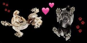 """""""Daha Ne Kadar Tatlı Olabilirdi?"""" Dediğimiz Köpüşlerin Aşağıdan Çekilmiş 21 Fotoğrafı"""