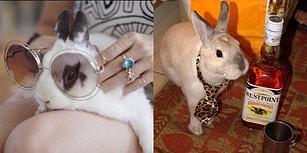 Aşırı Tatlılık Konusunda Çıtayı Arşa Çıkarmış Olan Birbirinden Minnoş 17 Tavşan Dostumuz