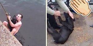 Buz Gibi Suya Düşen Köpeği Kurtaran Güzel İnsanlar