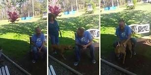 Hastanede Kilo Kaybeden Dostunu İlk Başta Tanımayan Köpeğin Efsane Tepkisi