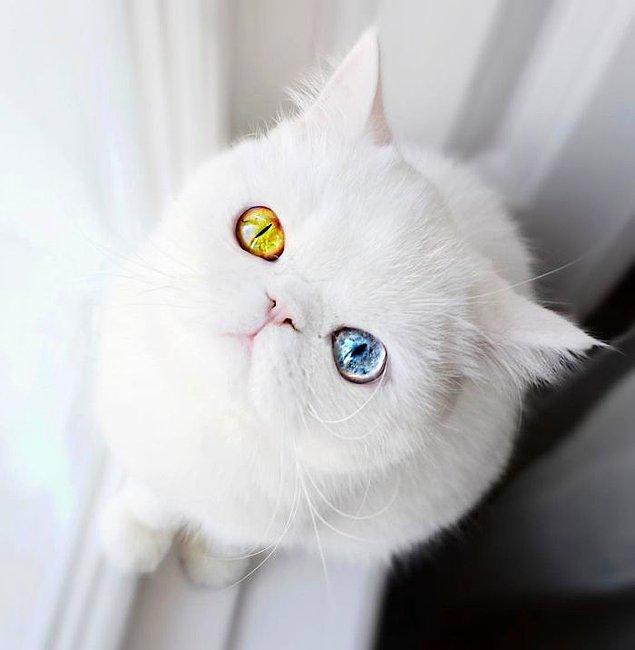 Yani şu gözlere bir kez bakan kafayı başka tarafa çeviremiyor. Bu nasıl bir güzelliktir yav?