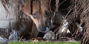 Fırtınalı Havada Doğum Yapan Anne Köpeğin ve Yavrularının Yardımına Koşan Güzel İnsanlar