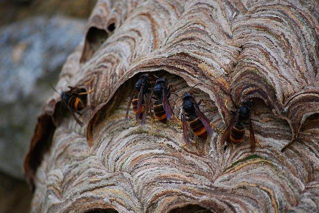Kırsal alanlarda yaşıyorsanız veya yaşadıysanız eğer arı kovanlarına çok yabancı değilsinizdir muhtemelen.