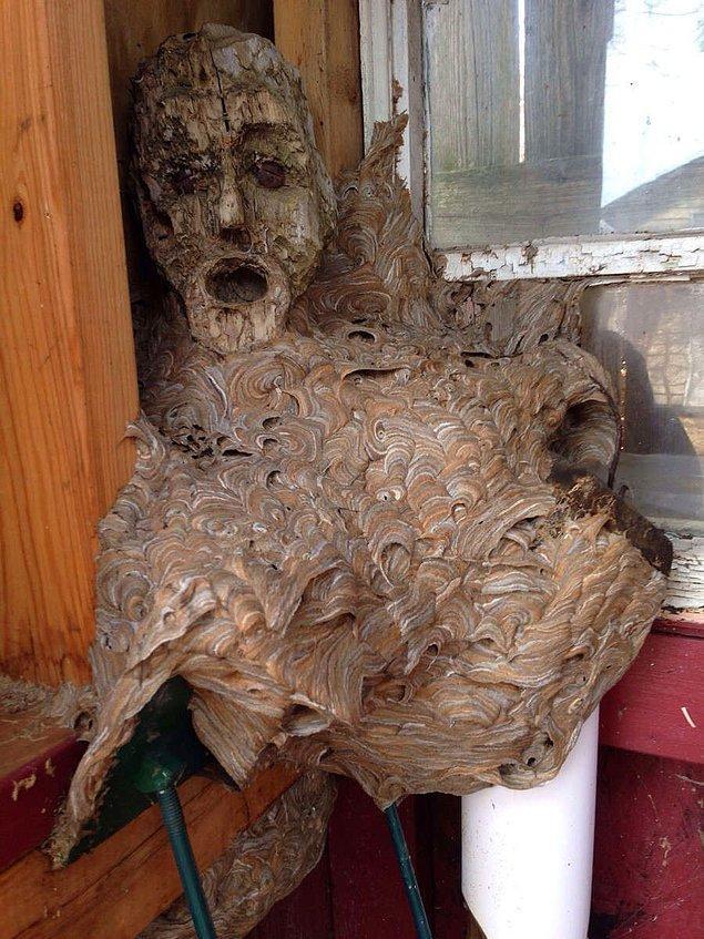 Arılar içinde bulundukları kış ayını geçirmek için gittikleri kulübede, tahtadan yapılmış maskenin üzerine kovanlarını yapmak ve büyütmek isteyince de ortaya bu insan silüetindeki arı kovanı çıkmış haliyle.