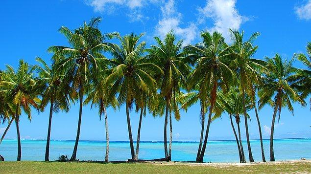 11. 55 milyon yıl önce Kuzey Kutbu'nda palmiye ağaçları vardı.