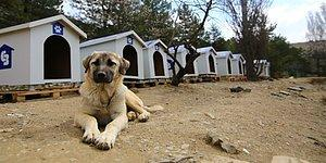 Sokak Hayvanlarını Zehirleyenlere Hapis Cezası Geliyor