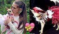 Sevginin Böylesi! Köpeği İçin Tasarım Kıyafetlere ve Tasmalara 45 Bin Lira Harcayan Kadın