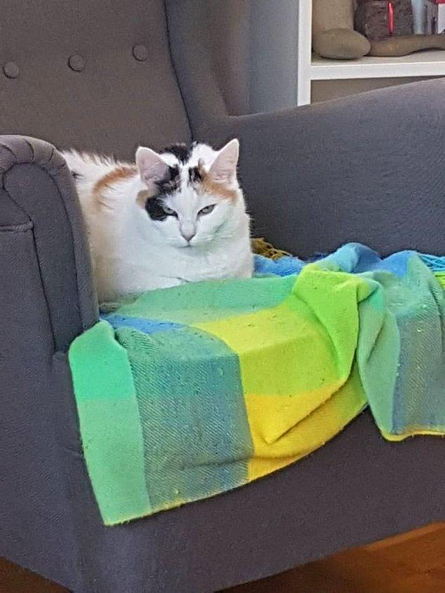 1. Kedinizi sahiplenirken saatlerce sarılıp yatacağınızı düşündünüz değil mi? Hayır, bunun yerine karşı koltuğa oturup size pis pis bakış atar.