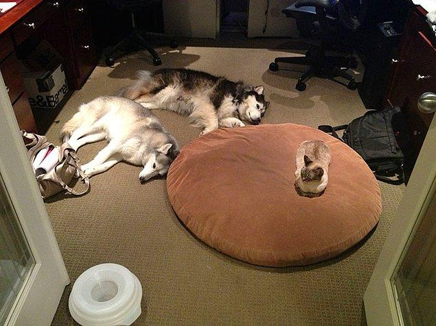 5. Yatak çalmayı da çok iyi bilirler.