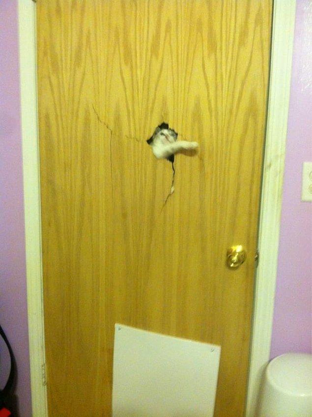 12. Ve kesinlikle evinizde kediniz tarafından yaratılan kalıcı bir hasar vardır.