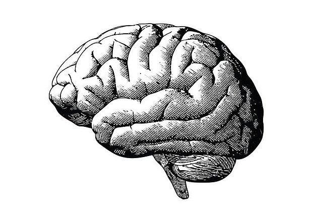 12. Eğer üzerine düşünürseniz, beyin kendi kendini adlandırmıştır.