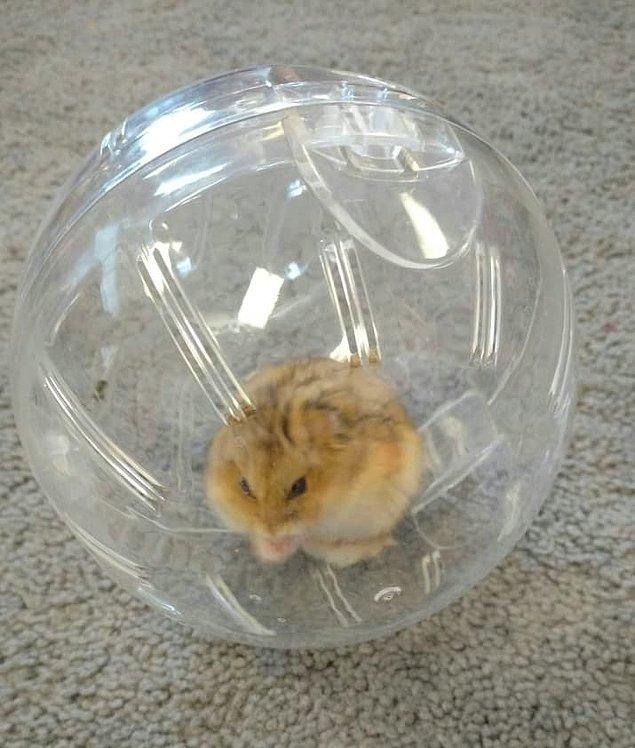8. Topun içinde salona doğru yuvarlandığını görmek nasıl bir his?