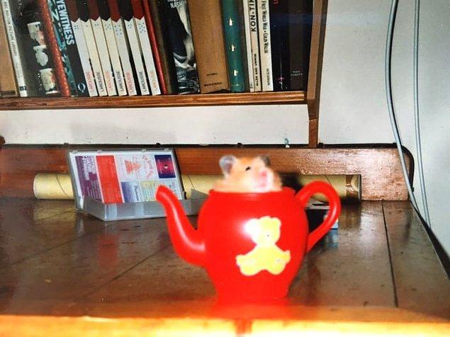 14. Dünyanın en tatlı yaratığı olduğu için minik dostunu bir kabın içine koyar, öylece seyredersin bazen.