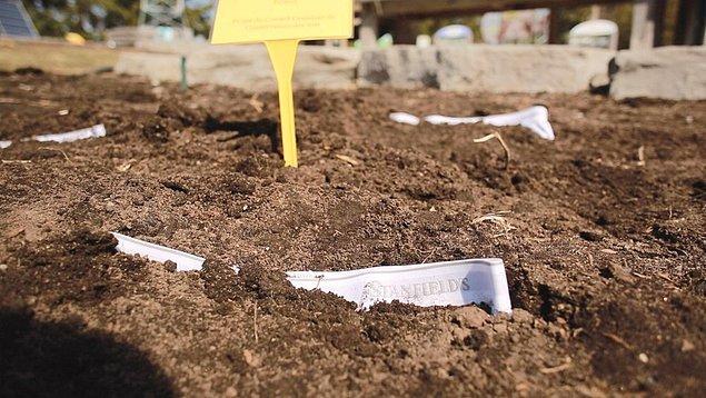 Etkinliğin bir parçası olmak için 15 cm derinliğinde bir çukura iç çamaşırını gömün. Yatay koyduğunuz iç çamaşırının üzerini toprakla kapatın.
