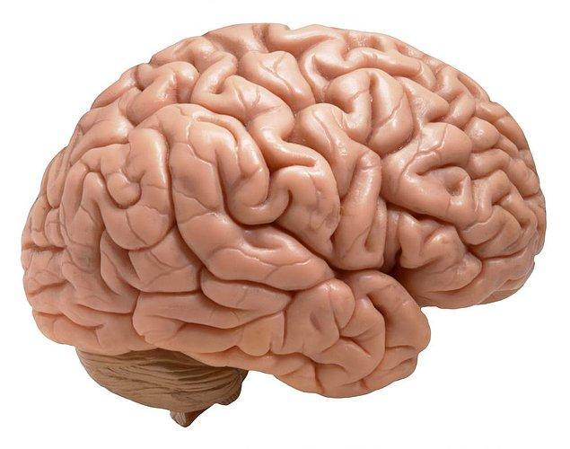 11. Beyniniz 18 yaşında. Beyin biyolojik gelişimini ilk 18 yılda tamamlar. Bu yüzden yaşınız kaç olursa olsun, beyniniz teknik olarak 18'lik.