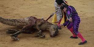 İnsanı Rahatsız Eden 'Raptor'lu Görüntülerle Boğa Güreşlerine Tepki