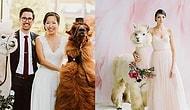 Görür Görmez Herkesin Kısa Süreli Bir Şok Geçirdiği Amerika'nın Yeni Trendi: Düğün Lamaları