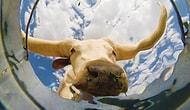 Kovanın Dibine Yerleştirilen Kamerayla Hayvanların Minnoş Su İçme Anları