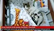Girdiği Evdeki Bebek Beşiğine Doğum Yapan Kedi