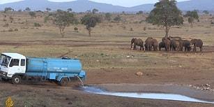 Kuraklıkta Susuz Kalan Hayvanlar İçin Kiralık Araçla 70 Kilometre Yol Giderek Su Götüren Adam