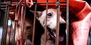 Çin'den Umut Dolu Haber: Kötü Şöhretli Yulin Festivali'nde Köpek Eti Sonunda Yasaklanıyor!