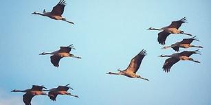 Bir Turna Olsan İlk Nereye Uçacağını Tahmin Ediyoruz!