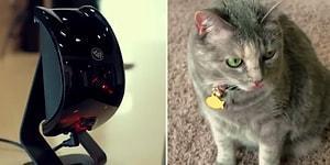 Siz Evde Yokken Minnoş Hayvanlarınızla Oyun Oynayacak Alet: Felik