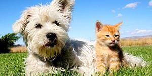 Yeniden Meclis Gündeminde:  Pet Shop'larda Kedi ve Köpek Satışına Yasak, Sokağa Atana ise Ceza