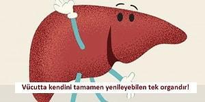 Karaciğeriniz Hakkında Öğrenince Çok Şaşırıp Biraz da Sevineceğiniz 12 İlginç Bilgi