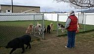 Dışarı Çıkmak İçin Sabırla İsimlerinin Söylenmesini Bekleyen Köpekler